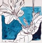 Trichterblume - 20 x 20 cm - Tusche auf Bütten (c) Zeichnung von Susanne Haun