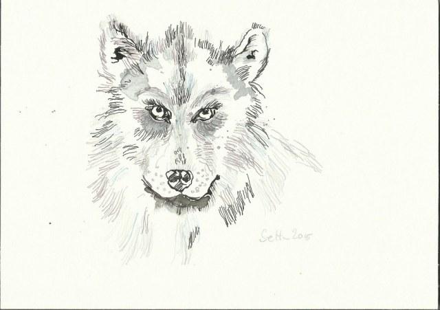 Wolf - 17 x 24 cm - Tusche auf Bütten (c) Zeichnung von Susanne Haun
