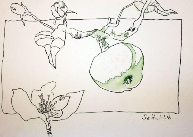 Evas Apfel (c) Zeichnung von Susanne Haun