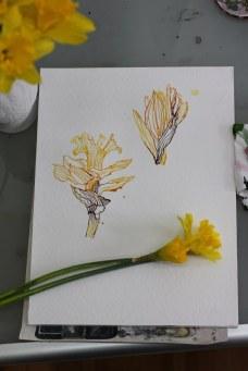 Entstehung Narzissen 2016 (c) Zeichnung von Susanne Haun