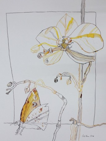 Orchidee und Schmetterling- 65 x 50 cm (c) Zeichnung von Susanne Haun