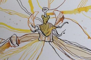 Orchidee und Schmetterling - Ausschnitt 2 - 65 x 50 cm (c) Zeichnung von Susanne Haun
