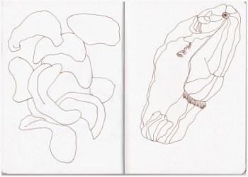 Cashewkerne (c) Zeichnung von Susanne Haun