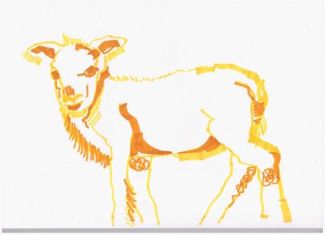 2. Schritt - Entstehung eines Lamm (c) Zeichnung von Susanne Haun