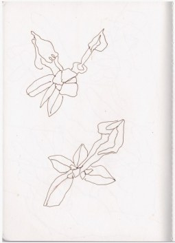 Azalee (c) Zeichnung von Susanne Haun