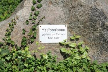 An der Dorfaue Heiligensee (c) Foto von Susanne Haun