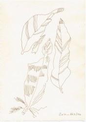 Fundstücke aus Cley next the sea (c) Zeichnung von Susanne Haun