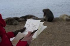 Horsey beim Seehunde Zeichnen (c) Foto von Hanne Siebers