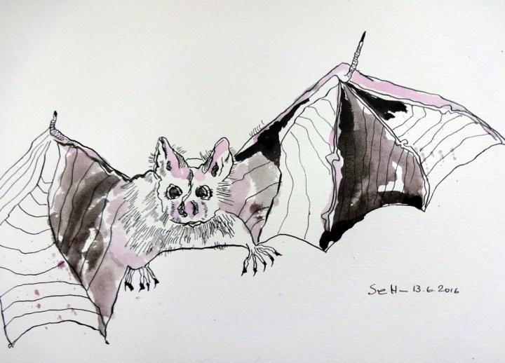 Huschende Fledermaus - 23 x 31 cm - Tusche auf Aquarellkarton (c) Zeichnung von Susanne Haun