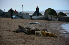 Seehunde in Horsey Seals (c) Foto von M.Fanke