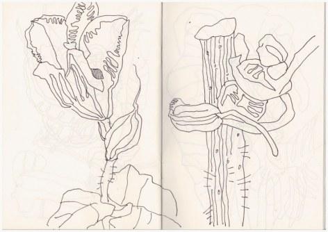 Florales aus dem Himmelbeet (c) Zeichnung von Susanne Haun