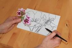 Ich nutze die Gunst der Stunde, die Geranie zu zeichnen (c) Foto von Susanne Haun