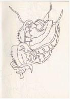 Florales aus dem Himmelbeet (c) Zeichnung von Susanne HaunFlorales aus dem Himmelbeet (c) Zeichnung von Susanne Haun
