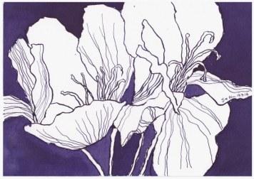 Französische Geranien - 17 x 22 cm - Tusche auf Hahnemühle Aquarellkarton (c) Zeichnung von Susanne Haun