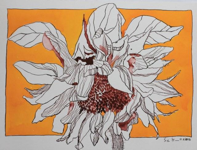 Entstehung Sonnenblume - 30 x 40 cm (c) Zeichnung von Susanne Haun