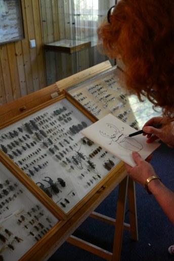 Susanne Haun zeichnet einen Hirschkäfer in Schmetterlingshorst (c) Foto von M.Fanke