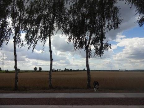 Spaziergang mit Conny Niehoff - eine kleine Pause (c) Foto von Susanne Haun