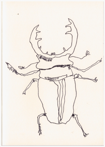 Hirschkäfer (c) Zeichnung von Susanne Haun