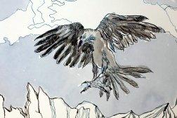 Detail Der schwarze Vogel namens Rabe ist im Anflug - 30 x 40 cm - Tusche auf Aquarellkarton Britannia (c) Zeichnung von Susanne Haun