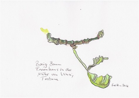 Toskana (c) Zeichnung von Susanne HaunToskana (c) Zeichnung von Susanne Haun