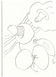 Gemüse (c) Zeichnung von Susanne Haun
