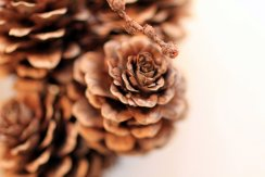 Gesammelter Herbst (c) Foto von Susanne Haun