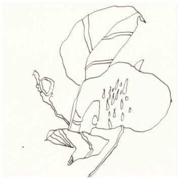 Äpfeläste (c) Zeichnung von Susanne Haun
