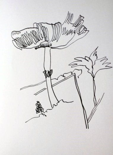 Im botanischen Garten Göttingen - Pilze (c) Zeichnung von Susanne Haun