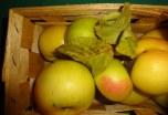 Apfel im Herbst (c) Foto von Susanne Haun