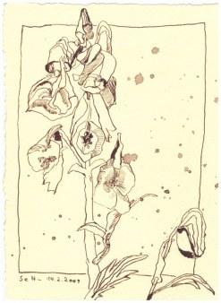 2 Weihnachtsangebot Rittersporn - Blumen, die nicht verblühen (c) Zeichnung von Susanne Haun