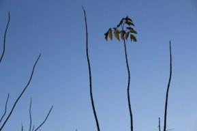 5 Natur am Insulaner (c) Foto von Susanne Haun