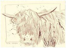 8 Weihnachtsangebot Der verhüllte Blick - englisches Rindervieh (c) Zeichnung von Susanne Haun