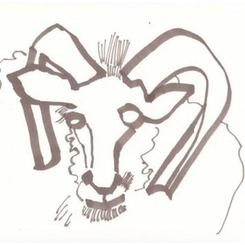 Widder - 1. Schritt (c) Zeichnung von Susanne Haun