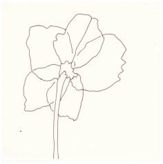 Samstag Morgen - Christrose (c) Zeichnung von Susanne Haun