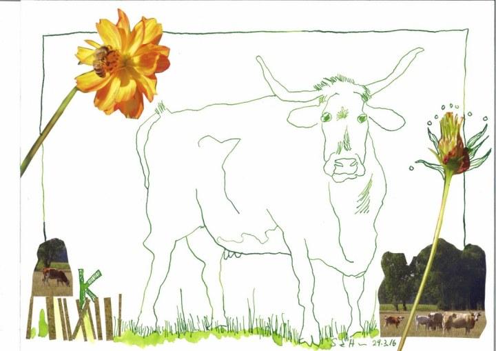 4 Kuh - 30 x 40 cm - Tusche auf Bütten (c) Zeichnung - Collage von Susanne Haun