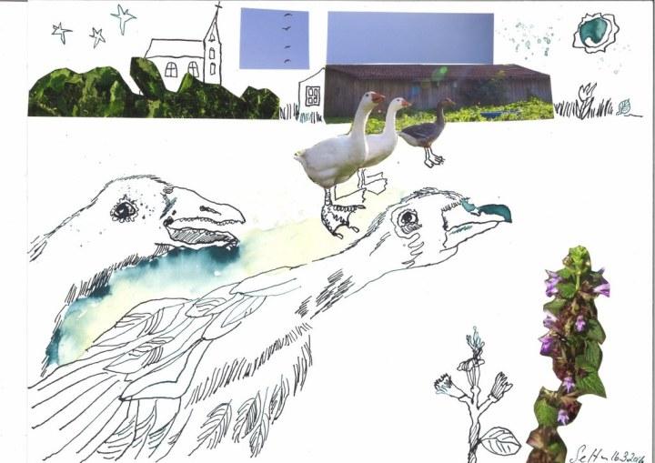 7 Gans - 30 x 40 cm - Tusche auf Bütten (c) Zeichnung - Collage von Susanne Haun