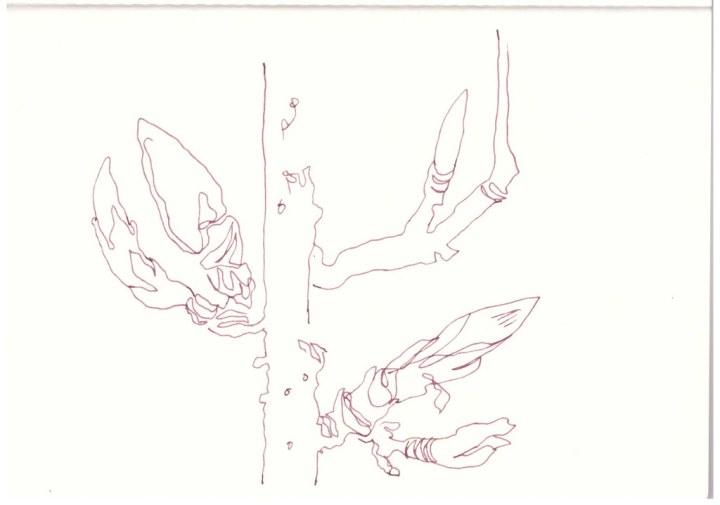 Erste Knospen - Frühling im Tempelhofer Hafen - Berlin (c) Zeichnung von Susanne Haun