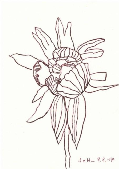Winterlinge - 17 x 22 cm - Tusche auf Aquarellkarton - Version 1 (c) Zeichnung von Susanne Haun