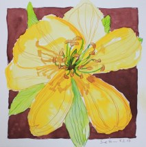 Winterlinge - 25 x 25 cm - Tusche auf Aquarellkarton - Version 3 (c) Zeichnung von Susanne Haun