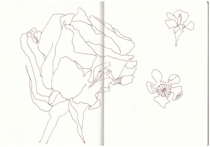 Geburtstagsblumen (c) Zeichnung von Susanne Haun