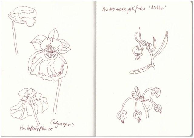 Blume Susanne Haun Seite 5
