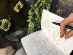 Teichpflanzen (c) Zeichnung und Foto von Susanne Haun