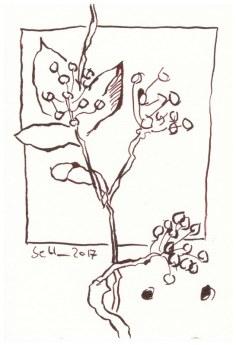 Florale Postkarten - 13 x 18 cm - Tusche auf Aquarellkarton (c) Zeichnung von Susanne Haun