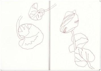 Blumen vom 8.4. - 30.4.17 (c) Zeichnungen von Susanne Haun
