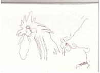 Hühner in der Mark Brandenburg, Neuroddahn (c) Zeichnung von Susanne Haun