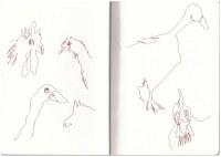 Hühner und Laufenten in der Mark Brandenburg, Neuroddahn (c) Zeichnung von Susanne Haun