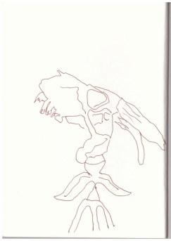 Präsentierter Ziegenskelettkopf in der Mark Brandenburg, Neuroddahn (c) Zeichnung von Susanne Haun