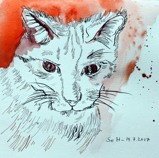 Ernie - eine Katze mit Witz - 25 x 25 cm - Tusche auf Aquarellkarton (c) Zeichnung von Susanne Haun