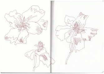 Geranien und andere Blumen aus Papas Garten (c) Zeichnung von Susanne Haun