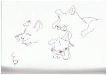 Der Schäferhung Caine (c) Zeichnung von Susanne Haun